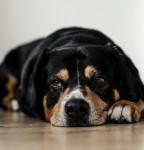 dog-sleep-pets